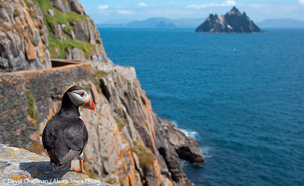 puffin on Skellig Michael, a wild island off the Atlantic coast